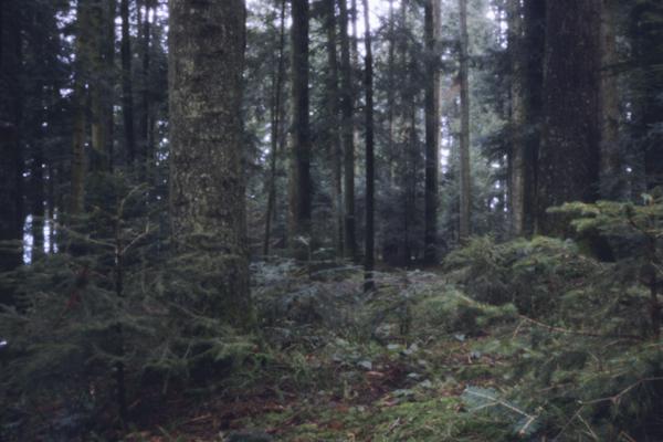 http://rownakbose.ch/files/gimgs/31_20080425-1-2-baerau-wald.jpg