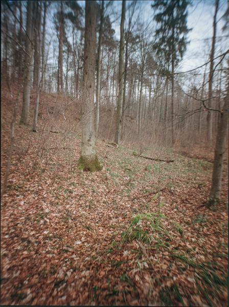 http://rownakbose.ch/files/gimgs/58_20150311-wald-buschbergsteig-a.jpg