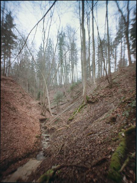 http://rownakbose.ch/files/gimgs/58_20150315-wald-forsthausweg-a.jpg
