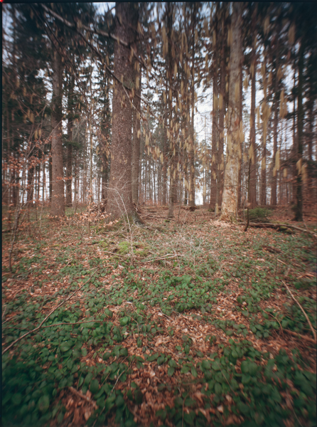 http://rownakbose.ch/files/gimgs/58_20150315-wald-forsthausweg-b.jpg