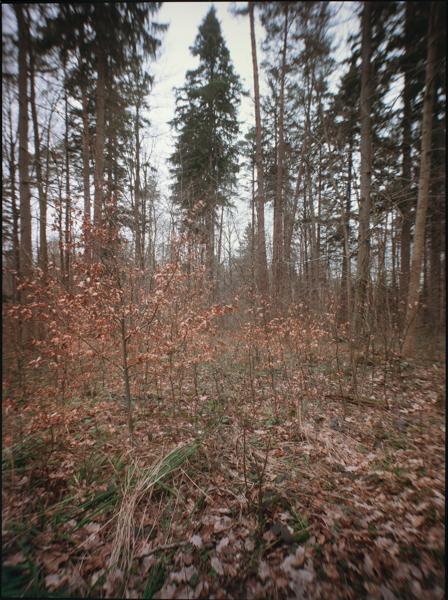 http://rownakbose.ch/files/gimgs/58_20150325-wald-buschbergstr-a.jpg