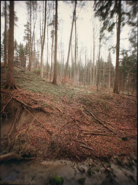 http://rownakbose.ch/files/gimgs/58_20150329-wald-adlisbergbachweg-c.jpg